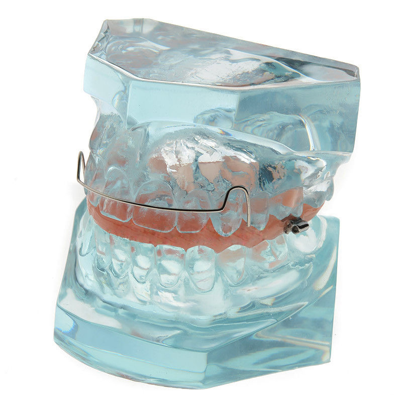 Orthodontic Demonstration Model For Maintenance M3006